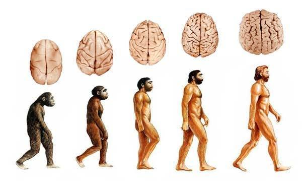 Reprogramming your stone age brain for health and happiness ...